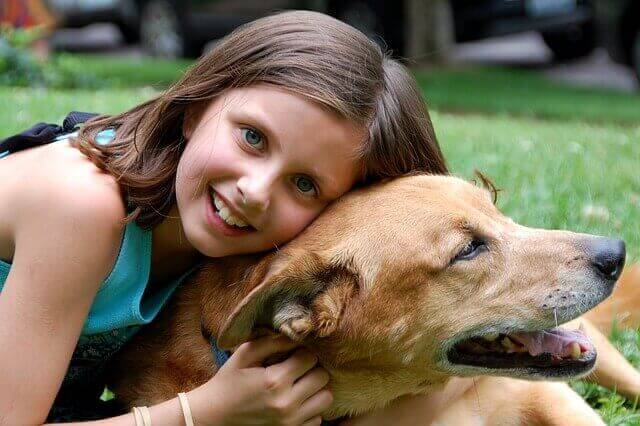 Tierhalterversicherungen vergleich online