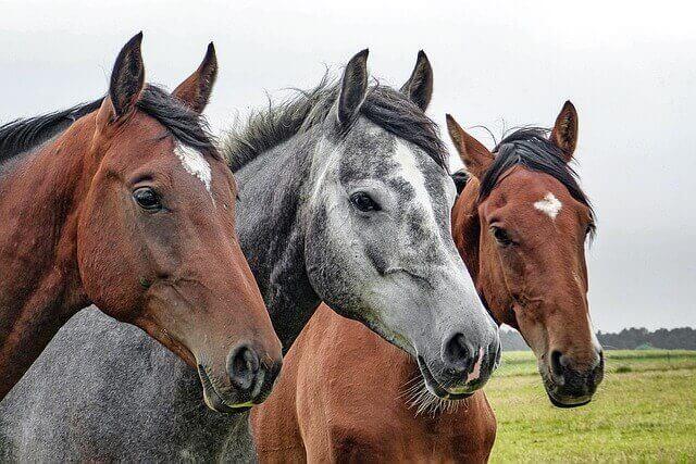 Pferdehalterhaftpflicht vergleich