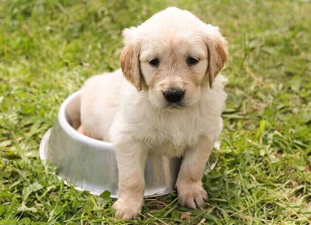 Hundehalterversicherung vergleich